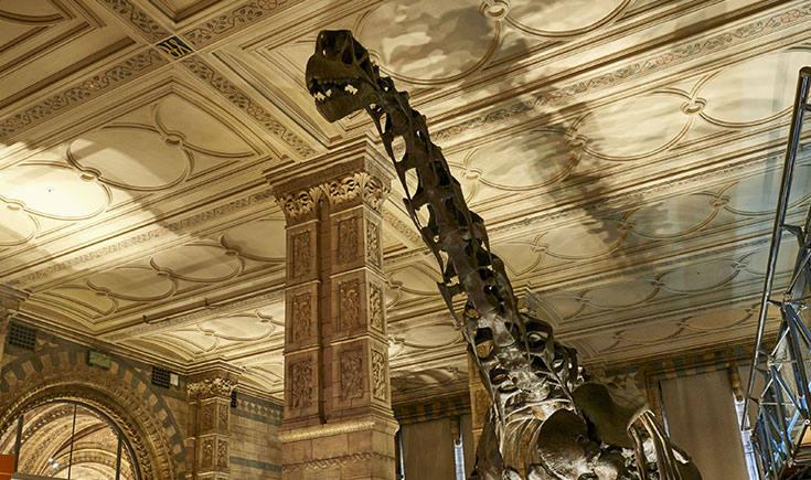 dinosaurios museo historia natural